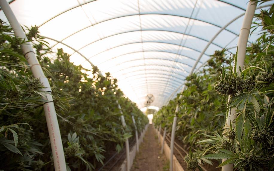 10 Ways hemp will help the world