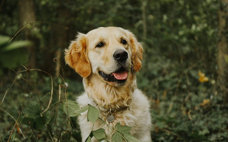 Does CBD oil work for Dogs?