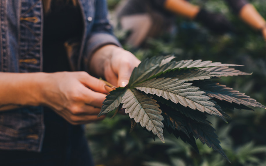 A beginners guide to THC