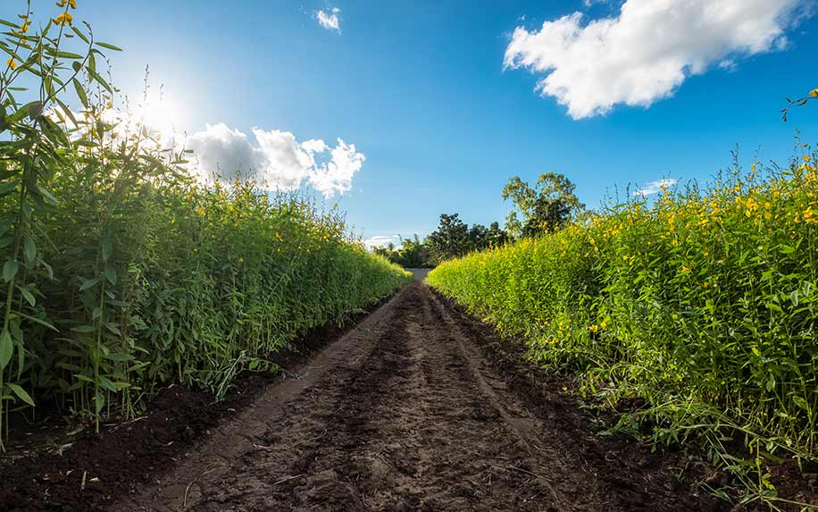 Hemp to grow after the 2018 Farm Bill