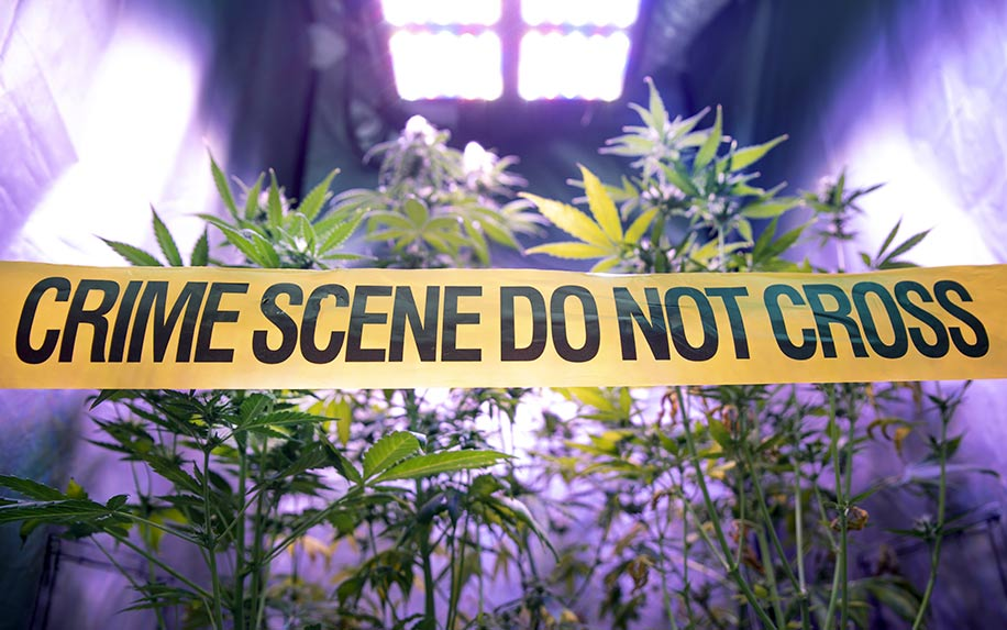 Legalizing cannabis: According the cops, the pros and cons