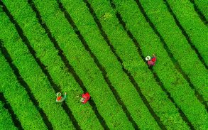 3 people working in a field in China