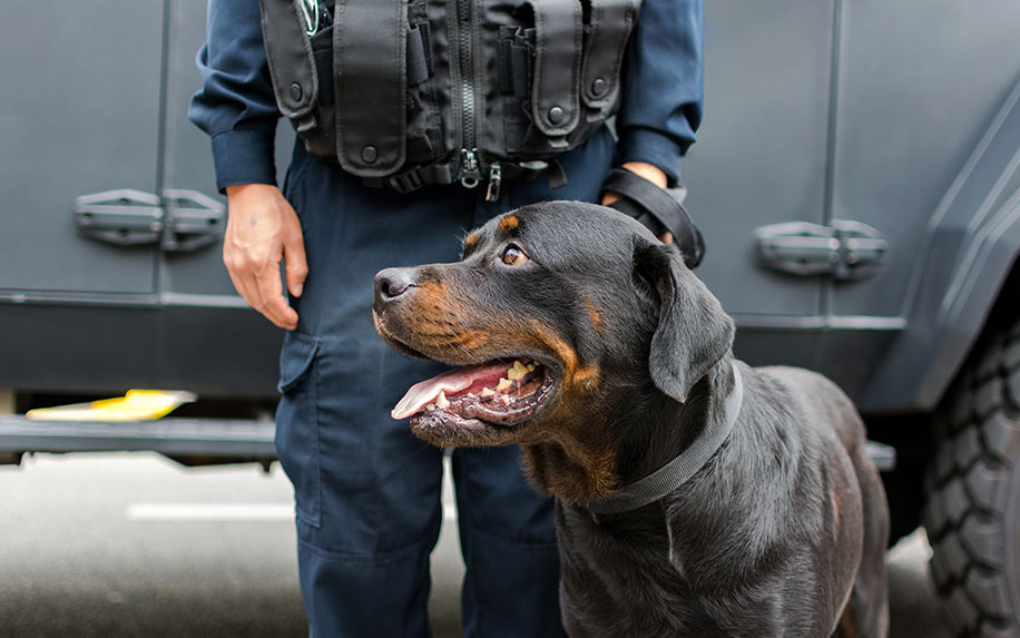 Why police dogs now ignore cannabis
