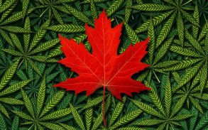 red maple leaf on green pot symbols