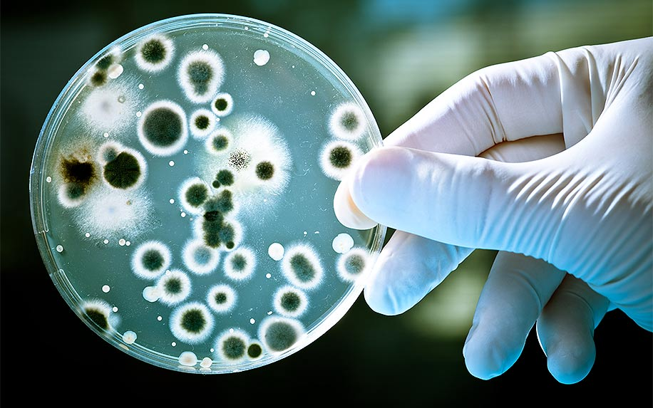 CBD use to treat superbugs.
