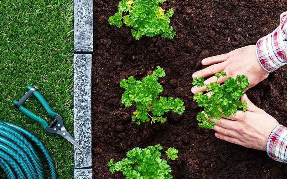 Using CBD for gardening.