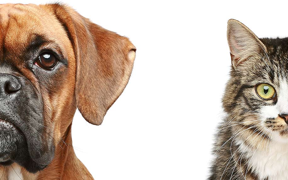 Dogs and cats. half of muzzle close up portrait on a white background.