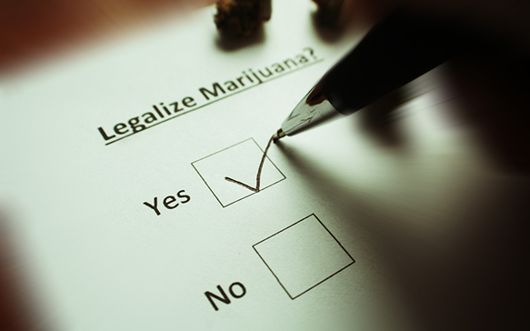 Cannabis Legislation and Politics