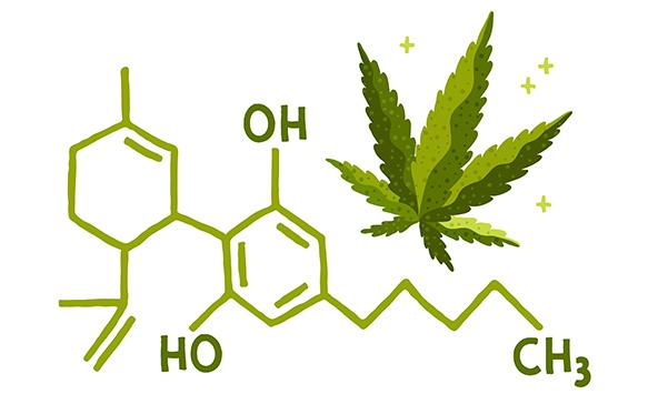 Cannibinoids Basics