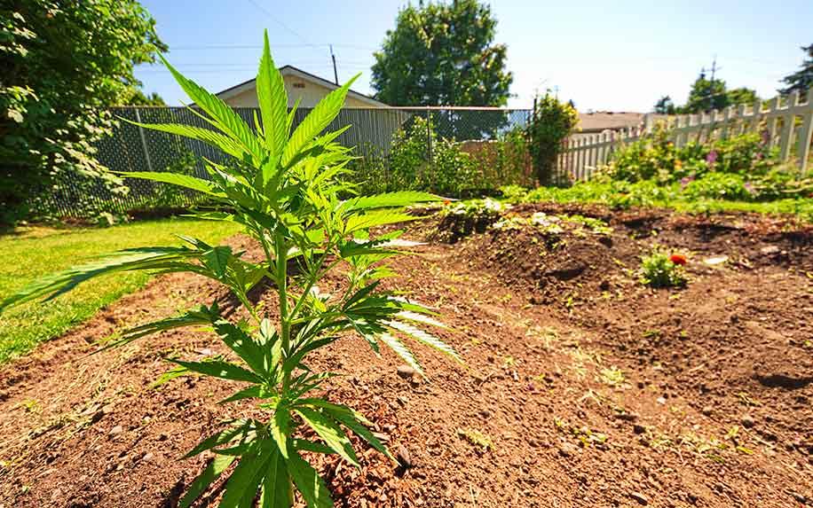 Wealth gap in medical cannabis.
