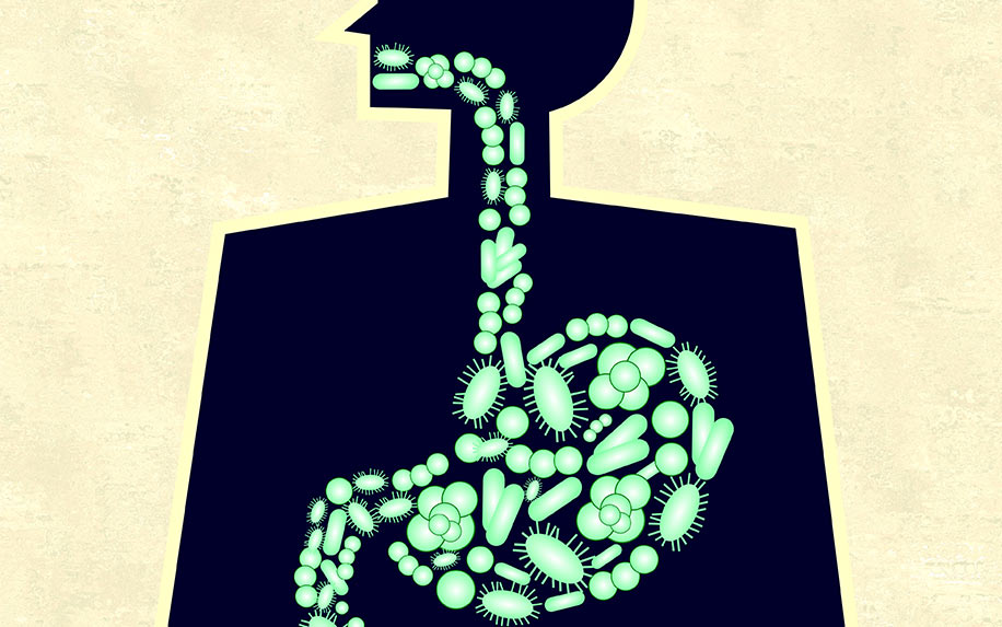 CBD improving the health of a gut