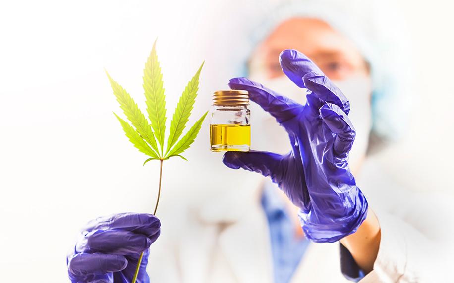 U.S. increasing cannabis research