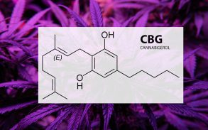 The potential benefits of the CBG cannabinoid.