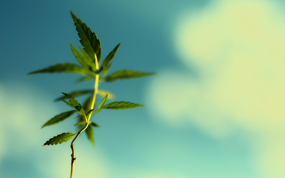 Knowing the health dangers of THC