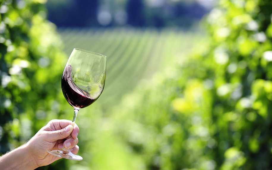 How cannabis can affect wine