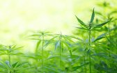 4 Facts and 20 Myths About Cannabis