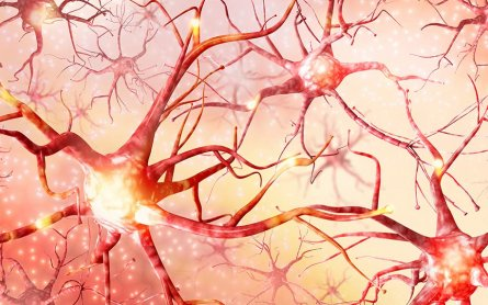 The Endocannabinoid System in the Developing Brain