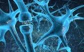 The Effects of Blocking Cannabinoid Receptors