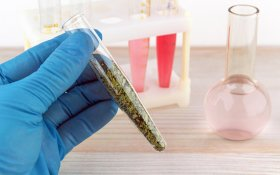 Synthetic Cannabinoids: Are They Dangerous?