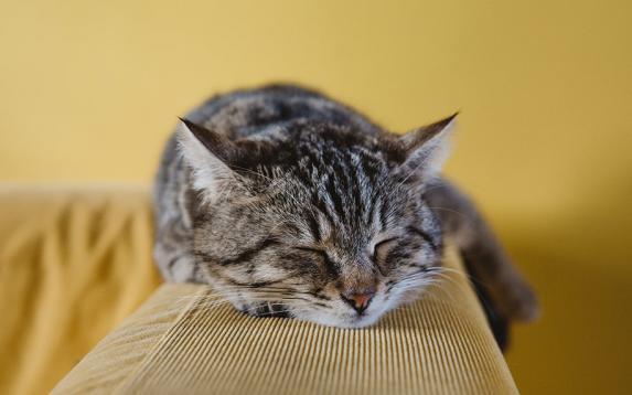 Aromatherapy for Sleep – Using Oils and CBD