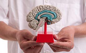 Brain and Eye Physiology
