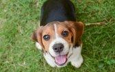 Ask a Vet: Can CBD Help Treat My Dog's Epilepsy?
