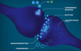 Novel Cannabinoid Interactions in the Body