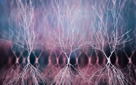 Cannabinoids and Alzheimer's Disease: What Is the Relationship?