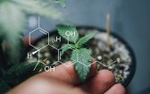 Cannabinoids in Reducing Food Intake and Body Weight