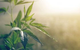 Synthetic Cannabinoids In Treating A Range Of Disorders