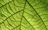 Leaf: Kristen Uses Cannabis to Combat Rheumatoid Arthritis