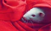 CBD Found to Treat Hyperactivity Within Rats