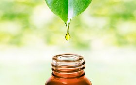 The Difference Between Cannabis Essential Oil and CBD Oil