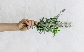 What Is CBD and Its Role in Anti Aging