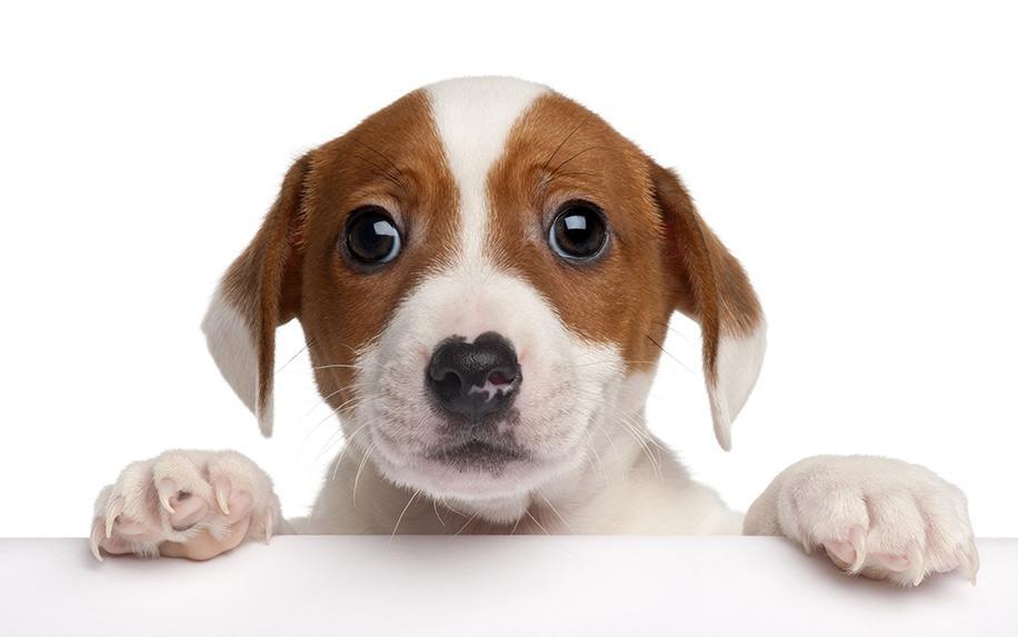 Do CBD Pet Products Work? Former FDA Chief Says 'No'