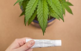 Does Hemp Lotion Contain THC?
