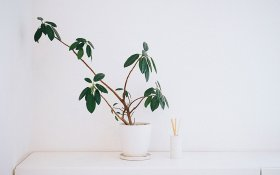 Essential Oils and CBD: The Best Types of Diffusers