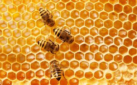 How Hemp Could Save Honeybees