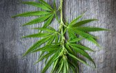 Hemp Wood: What Is It Good For? (A Lot, Apparently)