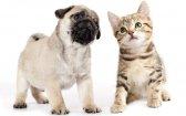 How Do I Use CBD Oil to Help My Pets?