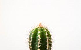 Keloid Scars – Top 5 Treatments Including CBD