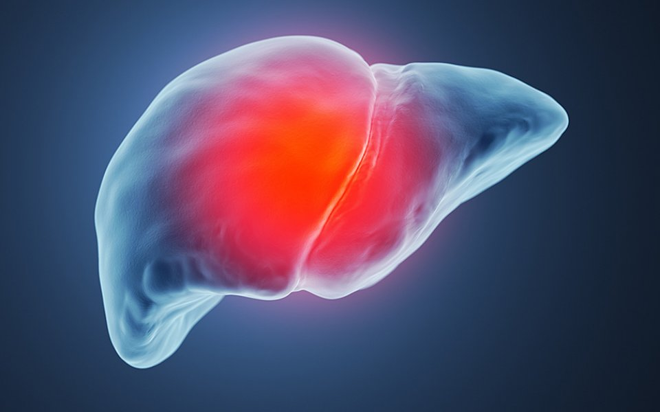 The Truth About CBD and Liver Damage