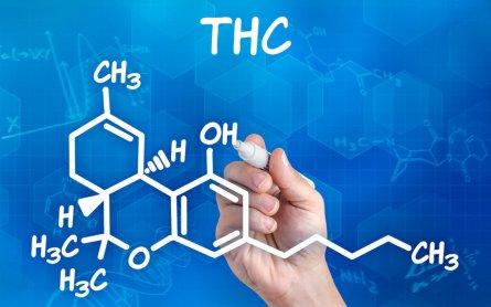 Can Marijuana Prevent Alzheimer's?