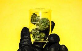 Medical Marijuana's Potential Therapeutic Value