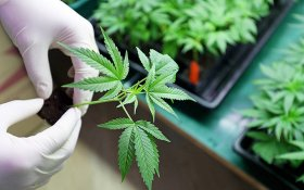 The Most Common Reason People Are Prescribed Medical Cannabis