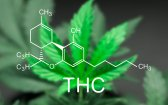 This Is Tetrahydrocannabinol: A Quick Guide to THC