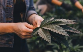 What THC Stands For – A Beginners Guide To THC