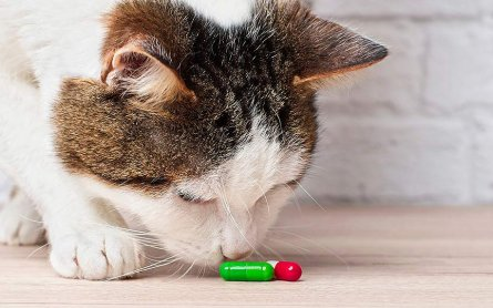 We Found It: The Top-Rated CBD Capsules for Cats