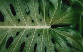 Treating Crohn's Disease & Diabetes with Cannabis
