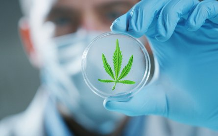 What the Surgeon General Got Right (and Wrong) on Cannabis Risks